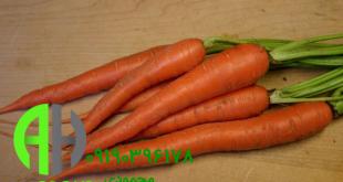 نمایندگی فروش هویج