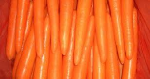 ارزان ترین مدل هویج گلخانه ای