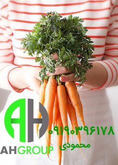 صادرات انواع هویج