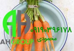 بزرگترین تولیدی هویج